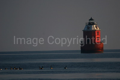 Sandy Point Shoal Lighthouse with Geese - Skidmore Md - 1/2/07