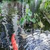 DSC_7784-lili gardens
