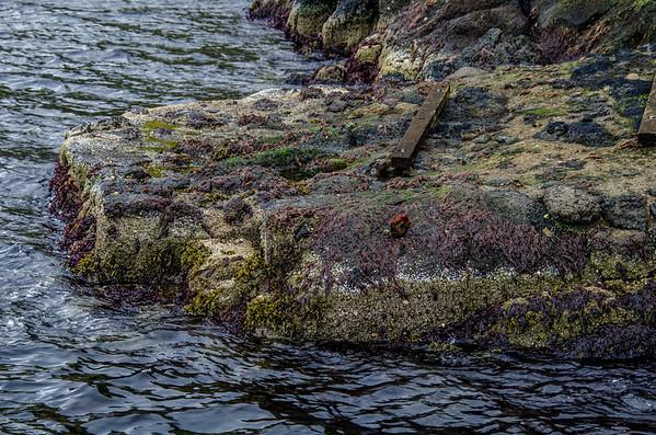Hellurnar Harbour