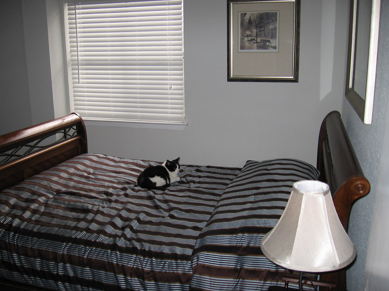 A view of the bedroom from the entry door. The cat isn't included in the purchase price.