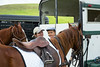 Keck_Polo_Match-17