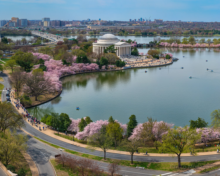 Hanami in Washington, D.C.: Cropped