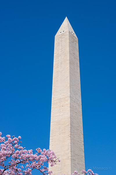 Cherry Blossoms & Washington Monument Peak [V1]