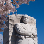 Martin Luther King, Jr. Memorial & Cherry Blossoms I