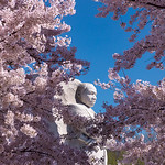 Martin Luther King, Jr. Memorial & Cherry Blossoms [V2]