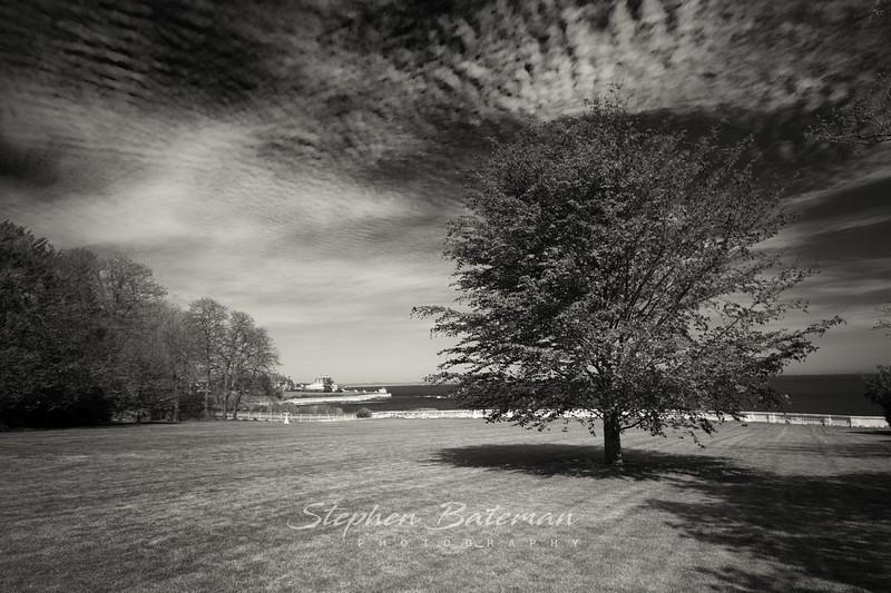 Lone tree Newport Rode Island