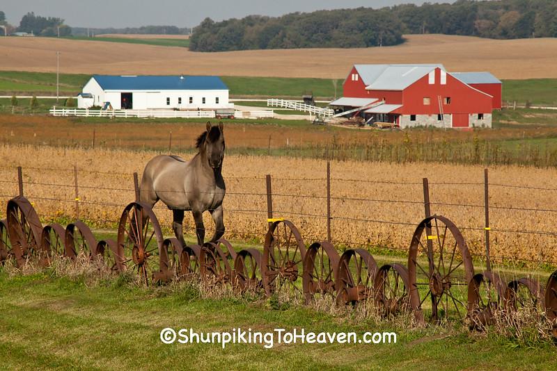 Horse by Wagon Wheel Fence, Howard County, Iowa