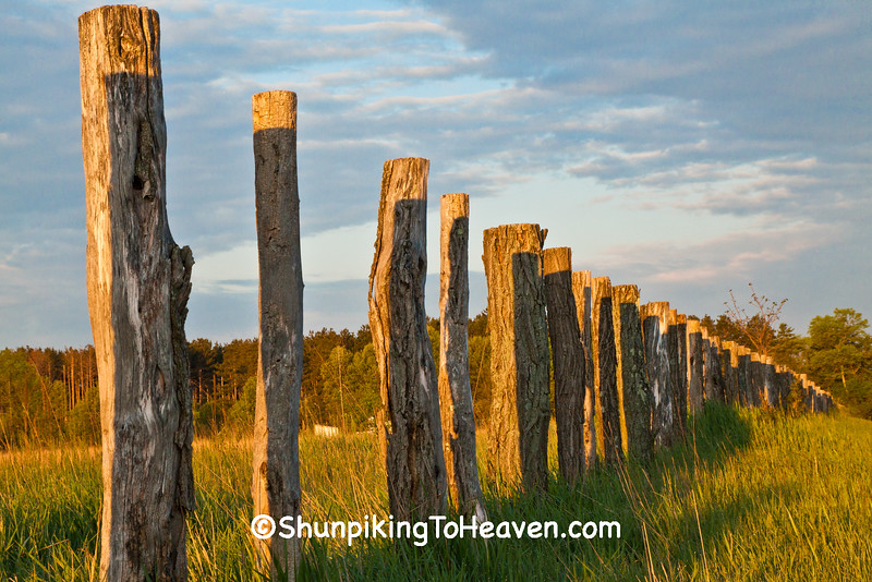Old Cassell Prairie Fence Posts, Sauk County, Wisconsin