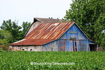 Blue Shed with Vultures at Sywassink Farm, Muscatine County, Iowa