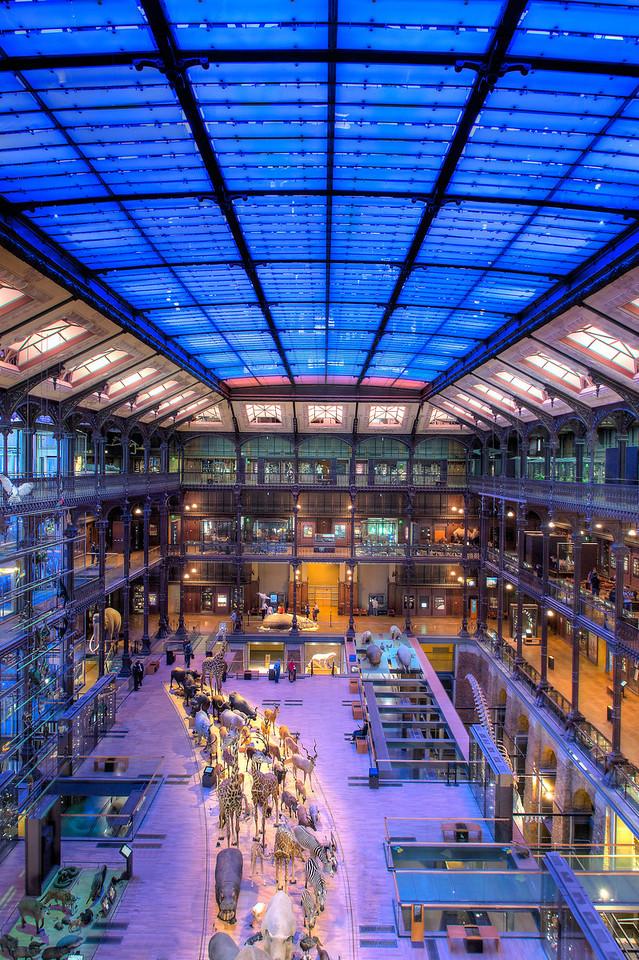 Grande Galerie de L'Evolution - Arthur