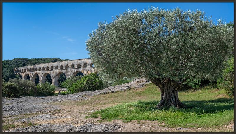 Alter Olivenbaum und Pont du Gare