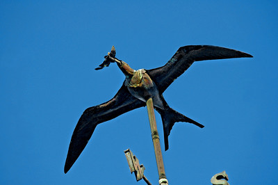 'Iwa flying over Hale'iwa (Hale, home, of the iwa)High on top of the Lili'uokalani Church against a bright blue sky in Hale'iwa, is a metal rendition of the graceful 'iwa (frigate) bird with a fish in its mouth. The iwa, with a 7' wingspan, can be seen soaring over the ocean, and diving for fish every day as the sun sinks into the ocean North Shore of O'ahu, Hawai'i