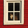 Cat looking out of window - 01