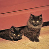 Red Barn kittens - 01- 02