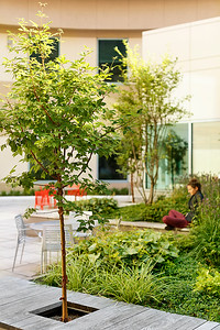 Recover-Green-Roofs-0021