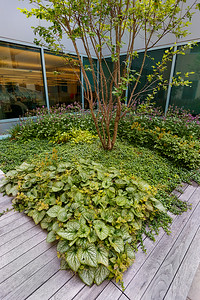 Recover-Green-Roofs-0031