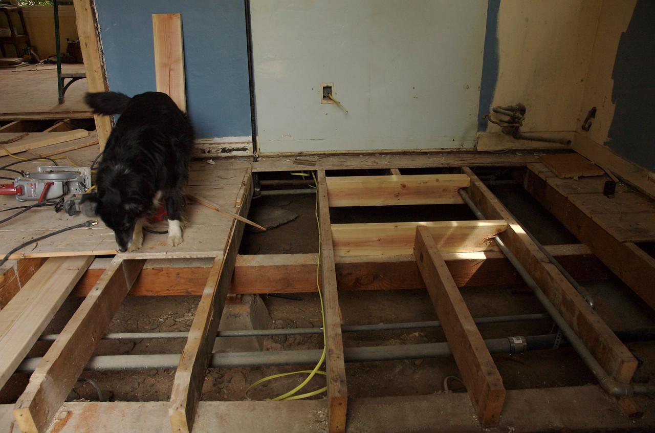 Scrappy checks out new Level, floor joists.