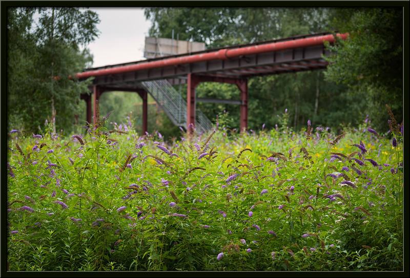 Wildblumen auf Industriegelände