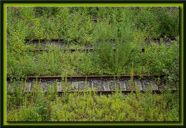Naturierte Gleise