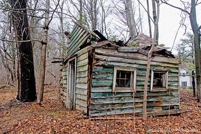 Old rustic shack in Muttontown Preserve.