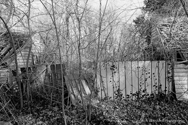 Rustic scene in Muttontown Preserve.