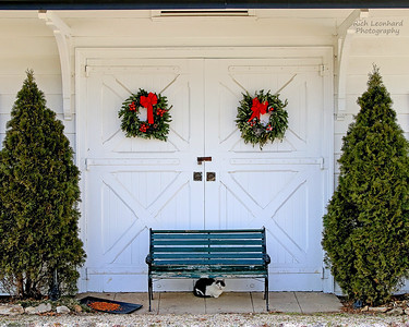 Rustic doors and Cat at Muttontown Preserve.