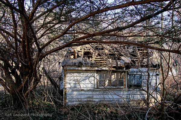 Old rotting shack at Muttontown Preserve.
