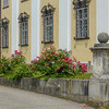 Monastery Roses