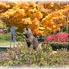 Western Carolina University Catamount
