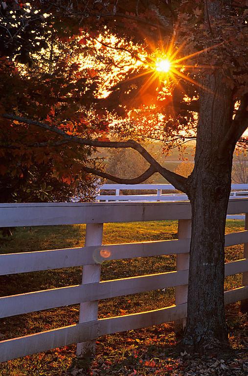 Shaker Sunrise
