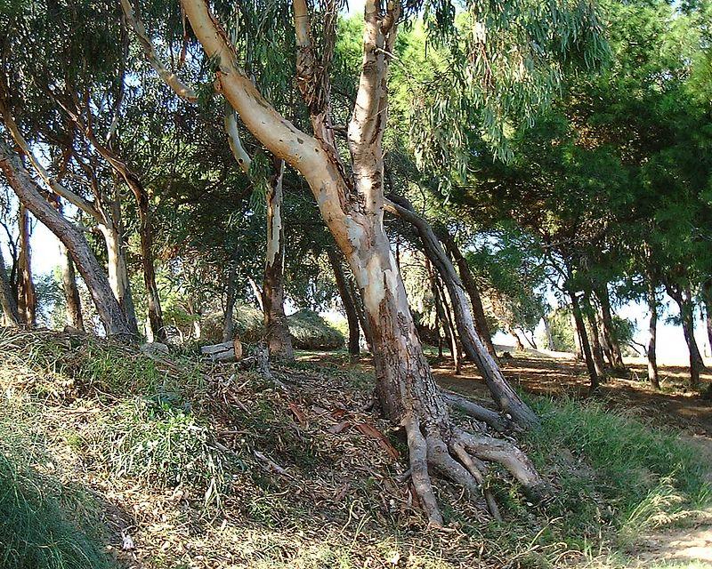 pld tree