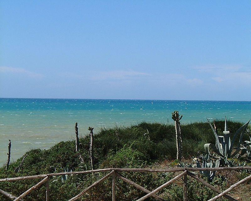 sea and  cactus