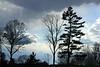 Treeline in blue copyrt 2014 mburgess