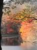 Fine Fall day  copyrt 2014 m burgess