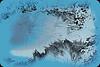 ferns on blue Copyrt 2014 m burgess