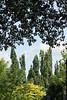 green trees & leaves  copyrt 2015 m burgess