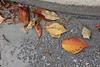 Fall road  Copyrt 2015 m burgess