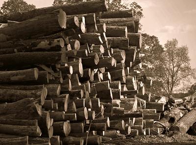 """Wood Work...""  copyrt 2014 m burgess"