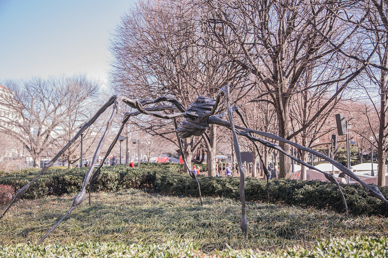 Spider, by Louise Bourgeois, 1996, cast in 1997, bronze with a silver nitrate patina, a theNational Art Museum Sculpture Garden, Washington, D.C.