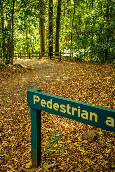 Springbrook National Park, QLD, Australia<br /> The Natural Arch.
