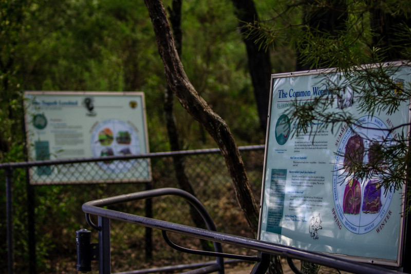 Morton National Park, NSW, Australia<br /> Fitzroy Falls. The nearby town was originally called 'Yarrunga', but was renamed after this waterfall.