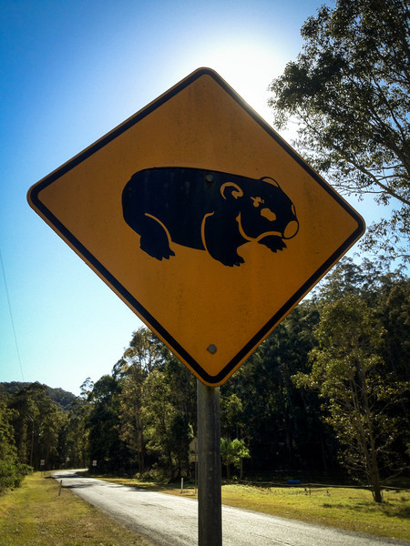 Wombats.<br /> Near Wollombi, NSW, Australia.