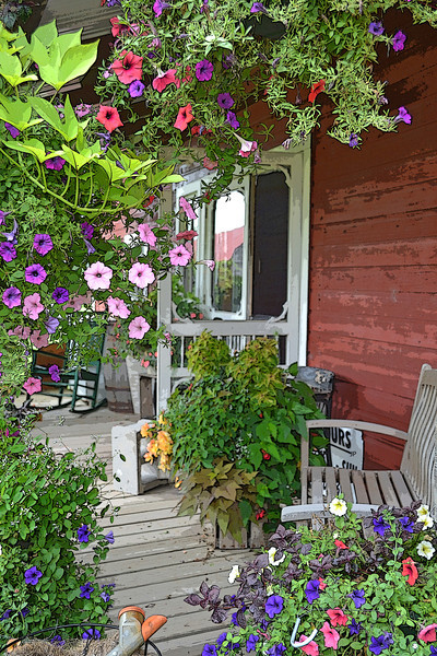 Petunia Porch - Taken at Fairhaven Farm
