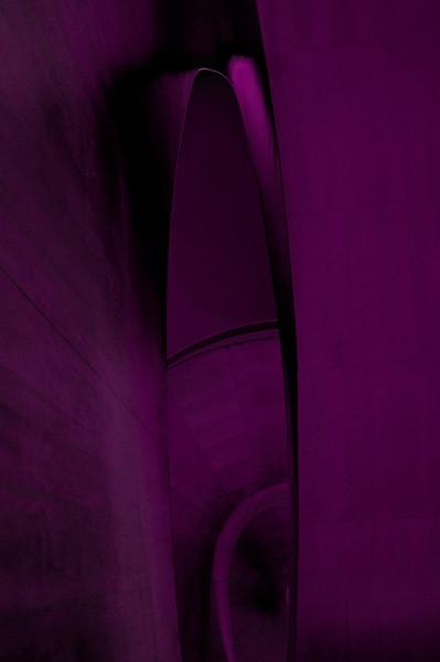 DSC_2736 purple