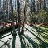 121125 - 2457 Walkway Through Swamp in Charleston, SC