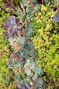 Urban Botanics 6-23-09 58