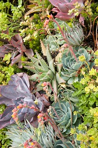 Urban Botanics 6-23-09 59