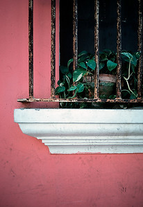 Philodendron and window, San Juan, Puerto Rico