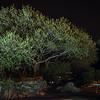 Villa Ogliastra: Olive Tree