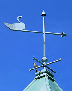 Bird on weather vane in Eisenhower Park,NY